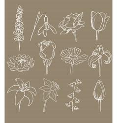 Many different flowers collection vector