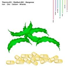 Winged beanswith vitamin b1 and vitamin b2 vector