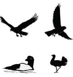 Birds of the world vector