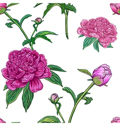 Vintage floral seamless pattern with peonies vector