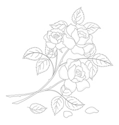 Flowers rose contour vector
