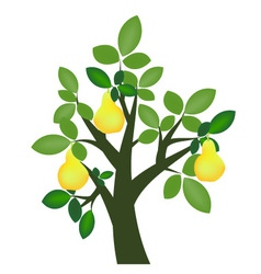 Decorative pear tree vector