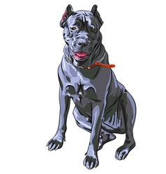 Black cane corso smiling italian breed of dog vector