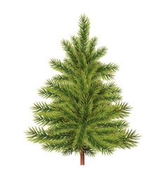 Fir tree vector