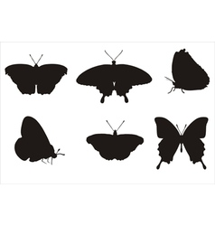 Butterflies in biology concept vector