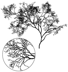 Detailed tree silhouette vector