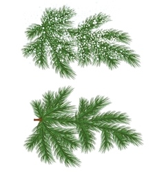 Isolated pine branch with snow vector