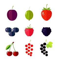 Berries flat vector