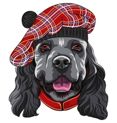 Dog american cocker spaniel in scottish tam vector