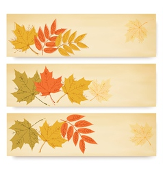 Three autumn banners with color leaves vector