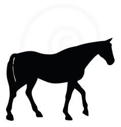 Horse silhouette in walking head up pose vector