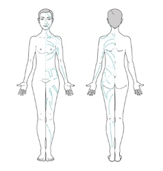 Lymphatic massage vector