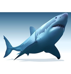 Great white shark vector