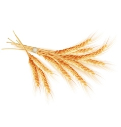 Wheat ears isolated on white background eps 10 vector