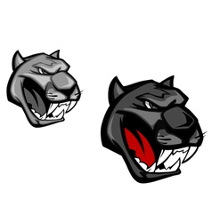 Angry panther or puma for mascot design isolated o vector