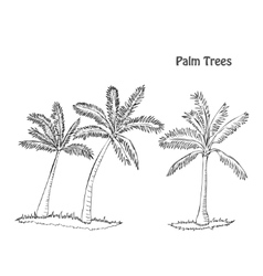 Palm trees set of sketches vector