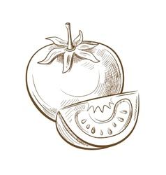 Picture of tomato vector