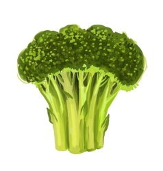 Picture of broccoli vector