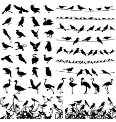 Silhouette of birds vector