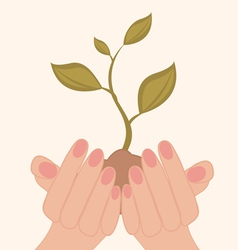 Green plant in hands vector