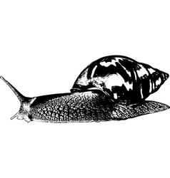 Snail achatina vector