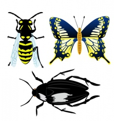 Illustration insect vector
