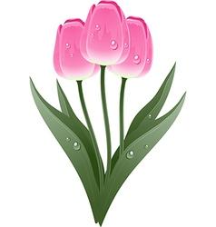 Tulip plant vector