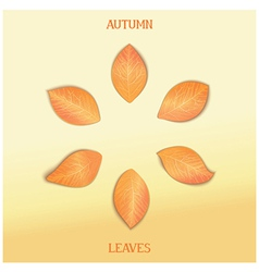Set autumnal foliage vector
