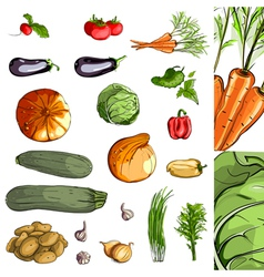 Fresh vegetables green collection vector