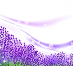 Lavender inspiration vector