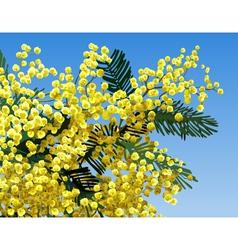 Mimosa flower vector