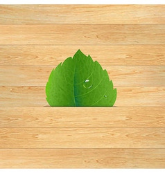 Wood texture with leaf vector