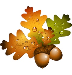 Autumn acorns vector