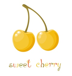 Yellow sweet cherry vector