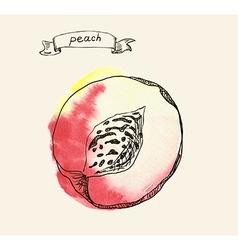 Peach sketch vector