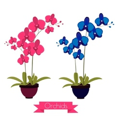 Coloful orchids in the pot vector