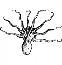 Octopus vector