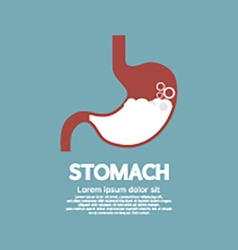 Flat design humans stomach graphic vector