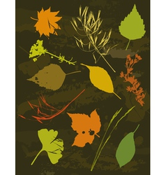Many tracing silhouettes grass leafs flower ve vector