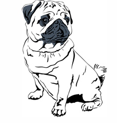 Sweet dog pug breed hand drawing vector