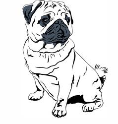Sweet dog pug breed hand drawing vector