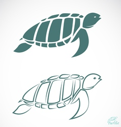 Image of an turtle vector