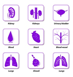 Icons internal human organs vector