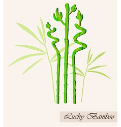Lucky bamboo vector