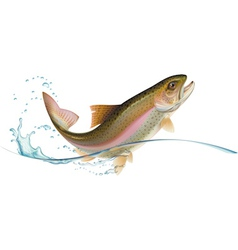Jumping trout vector