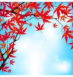 Red japanese maple leaves against blue sky eps 8 vector