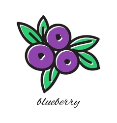 Doodle blueberry hand-drawn object isolated on vector