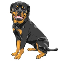 Dog rottweiler breed vector