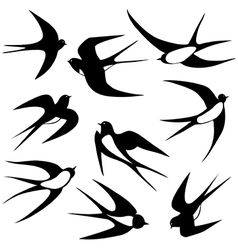 Bird swallow set poses vector