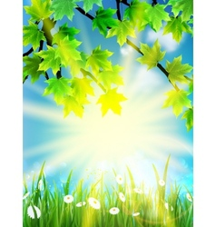 Eco background - green leaves grass bright sun vector